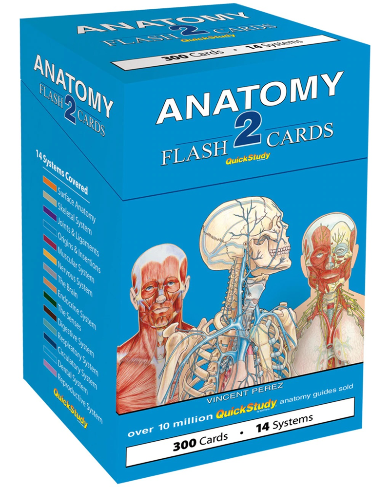 Barchart Anatomy 2 Flash Cards (SKU 1030531721)