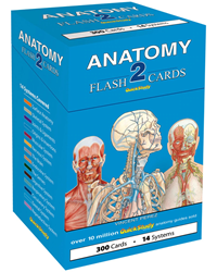Barchart Anatomy 2 Flash Cards